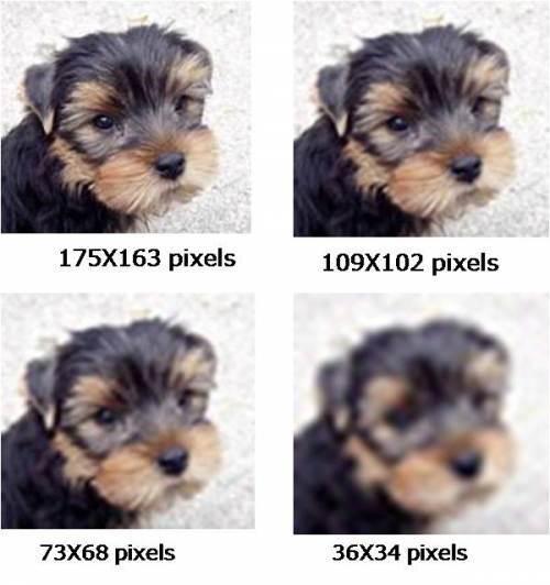 Atributos de uma imagem: 4 imagens de um cachorro yorkshire em diferentes resoluções