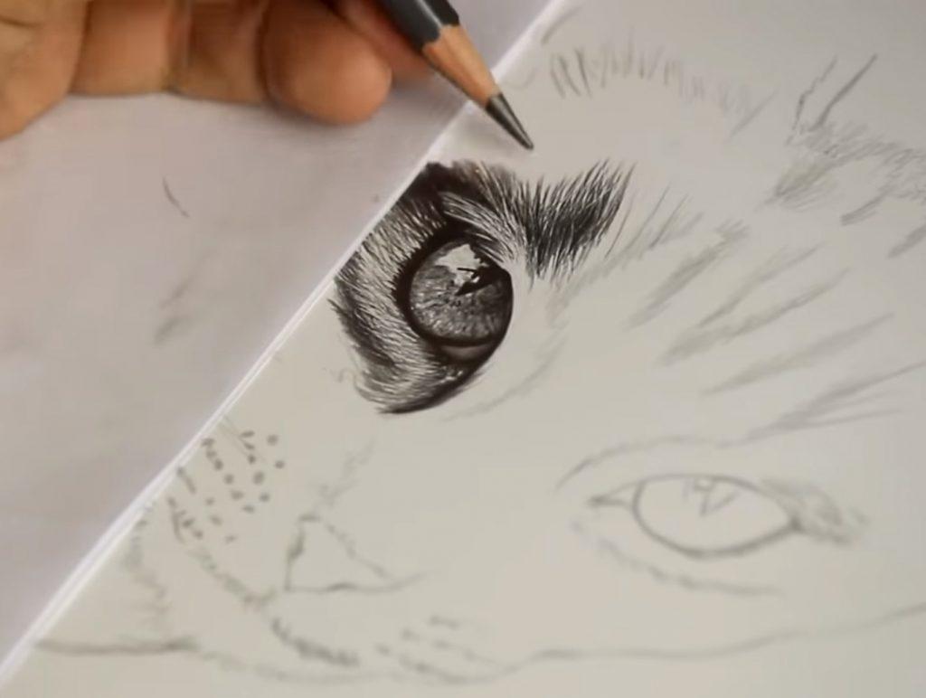 Como Desenhar Pelo De Animais